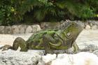 Puur natuur,Leguanen in de tuin.