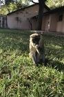 1 van de vele aapjes in de tuin
