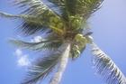 zonnen onder palmboom