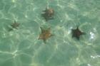 zeesterren