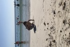 Super leuk strand