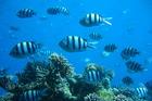 Mooie onderwaterwereld